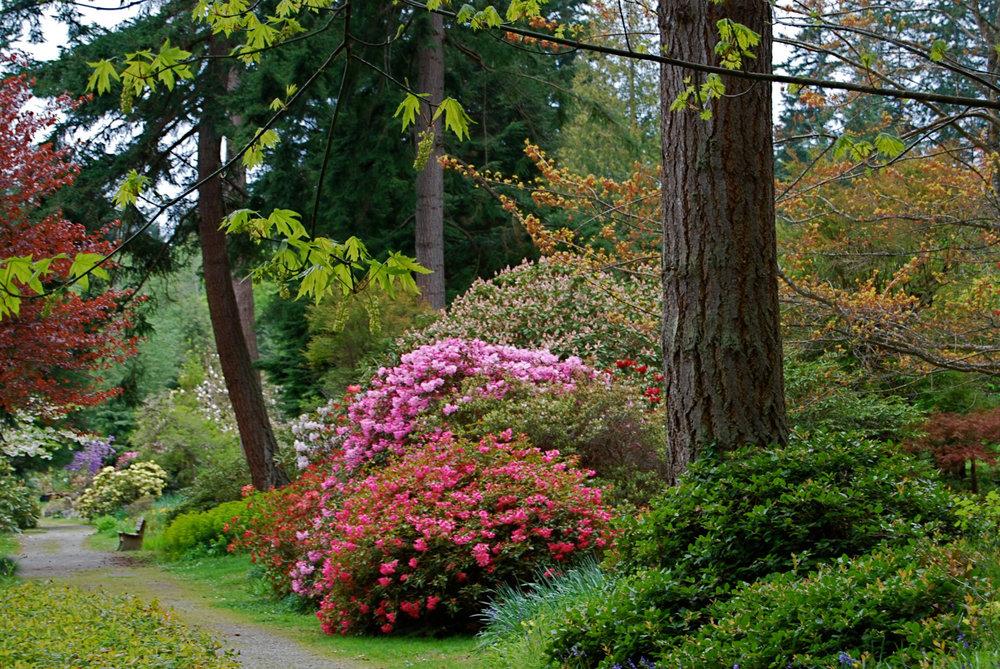 Whidbey Island Chapter — Meerkerk Gardens