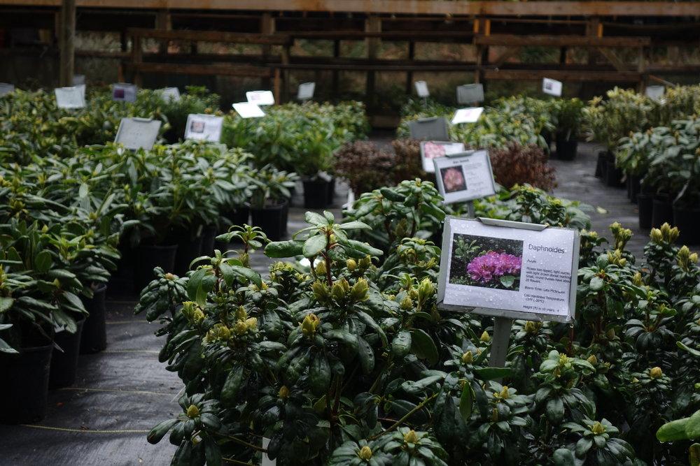 plantsforsale.JPG