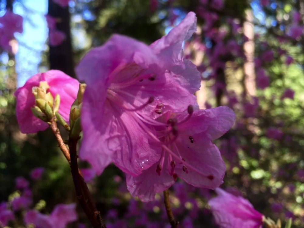 cornell pink.jpg