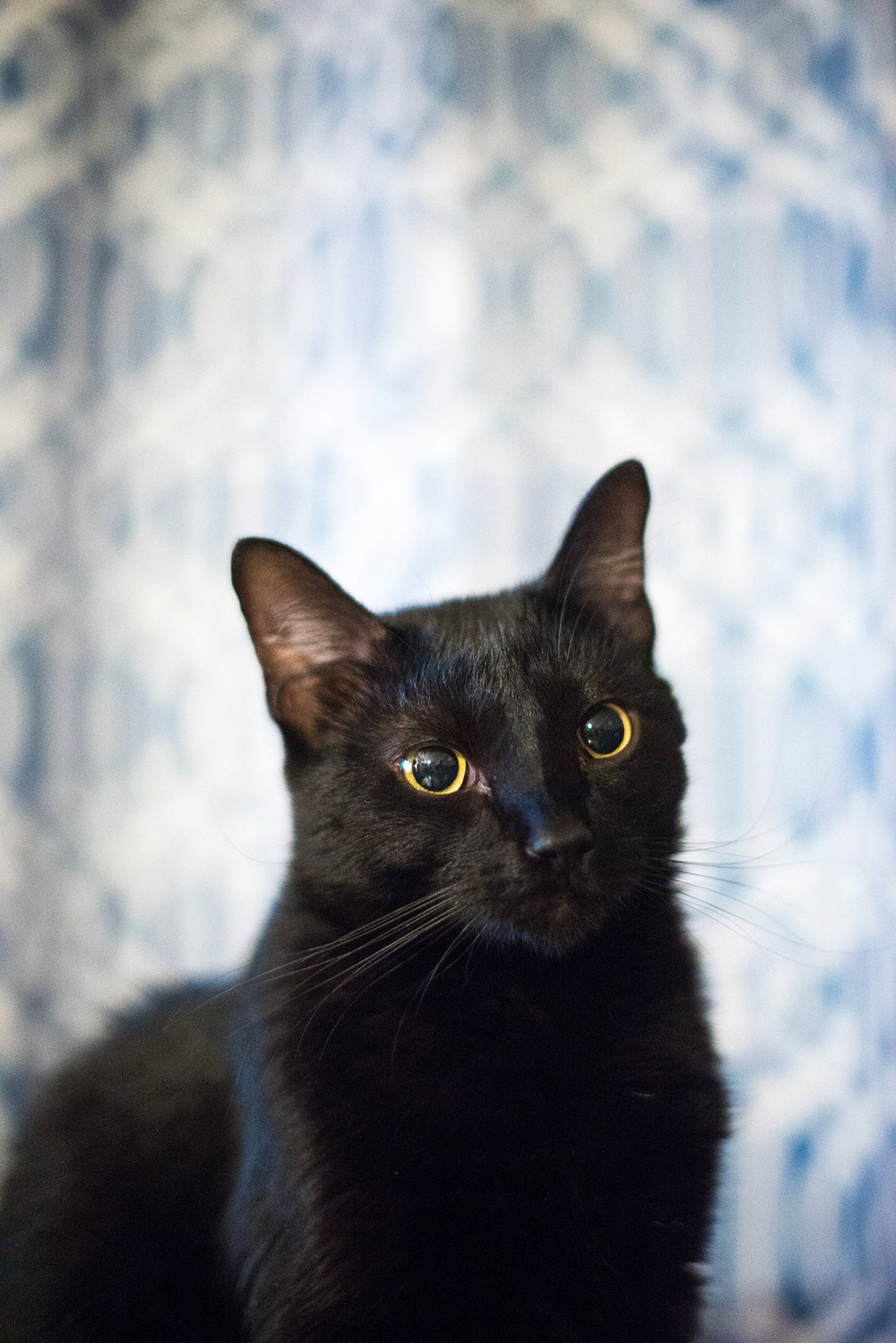 This is Bokeh. He provides good company and models quite well.