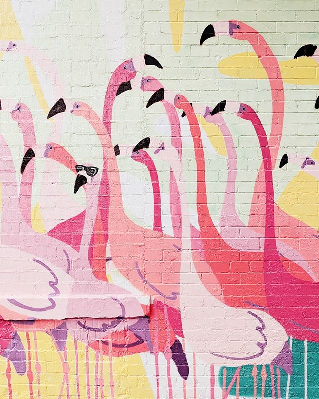 Be that flamingo w/ the hater blockers on. Stay wavy 🌊 #dcitystyle #thebmorecreatives #mydccool