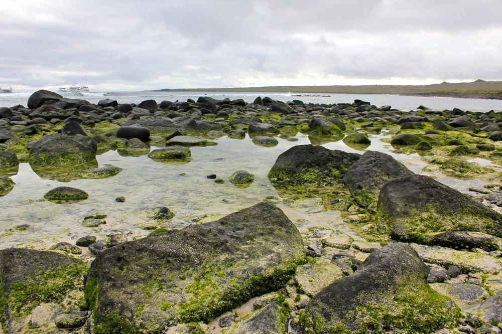 Galapagos Lichen.jpg