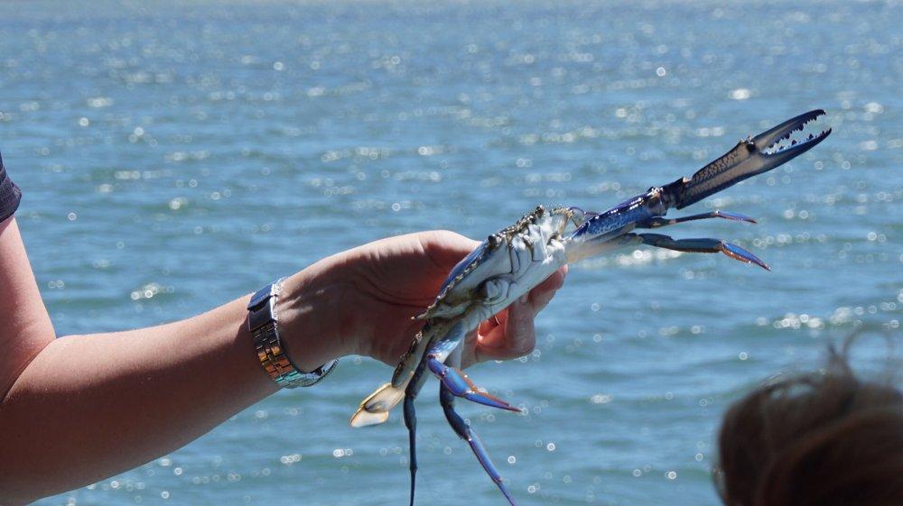 Blue Crab Mandurah