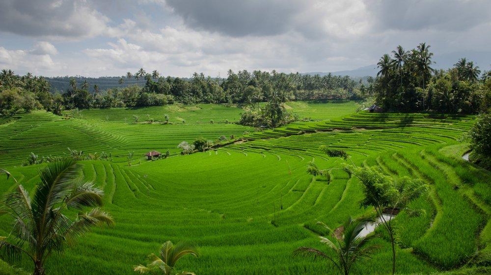 See Bali -