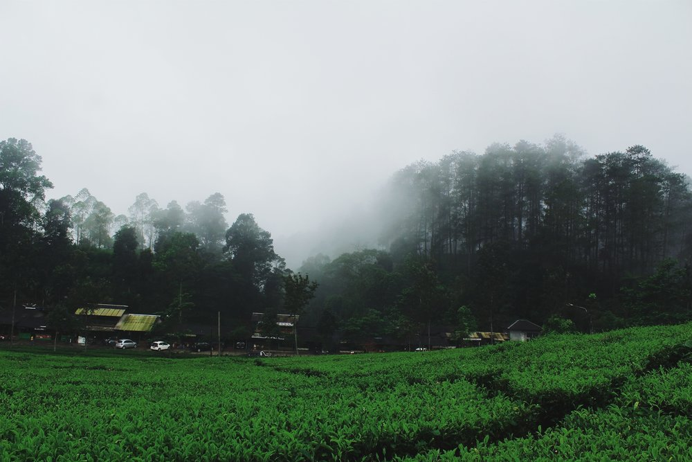 See Bandung -