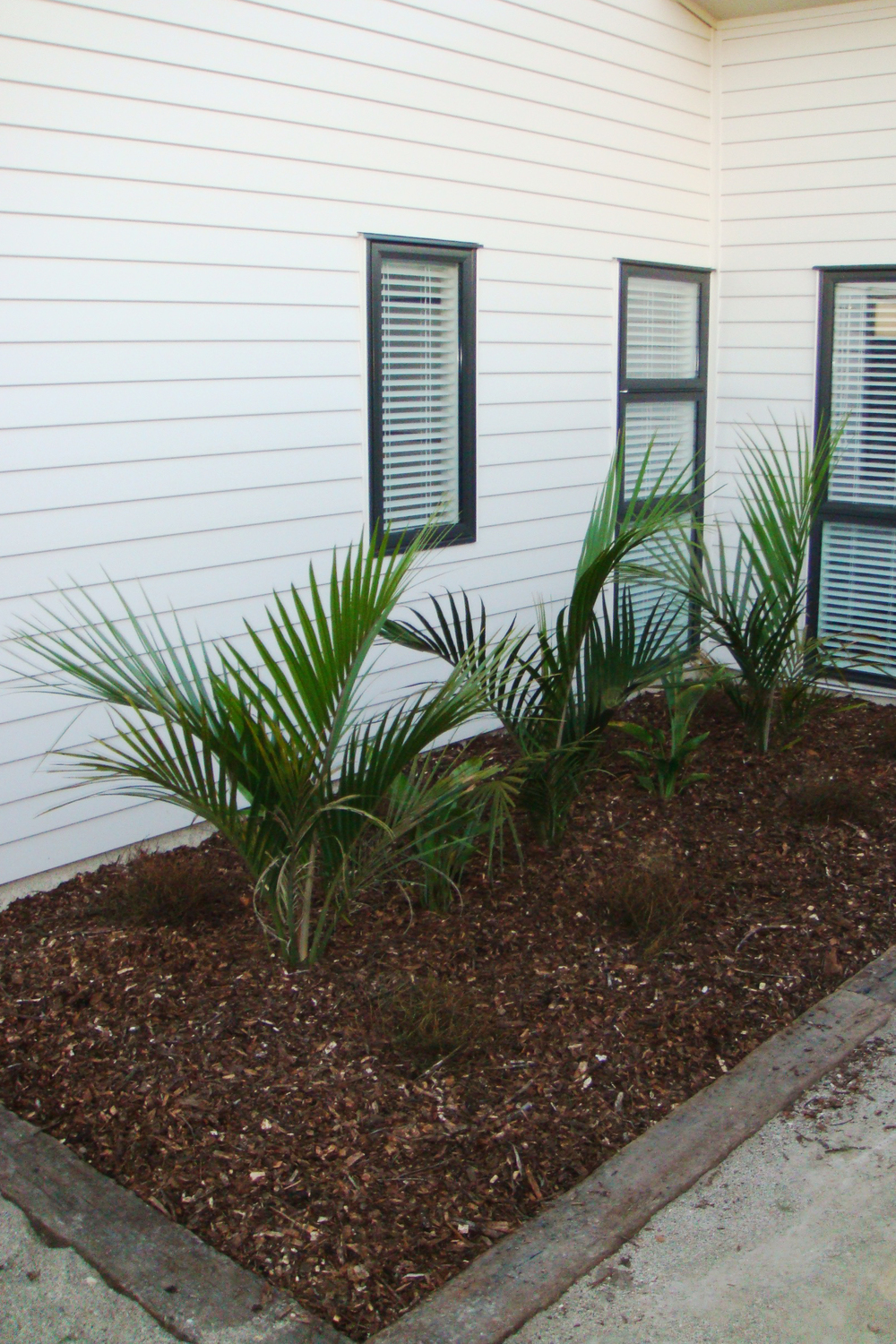 Nikau Palms, Stelitzia for colour and ground covers – low maintenance option