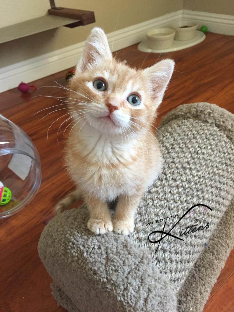 Boomer the Cat from Instagram @myfosterkittens