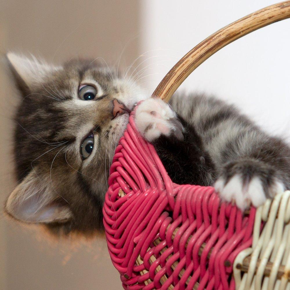 kitten-2973049_1920.jpg