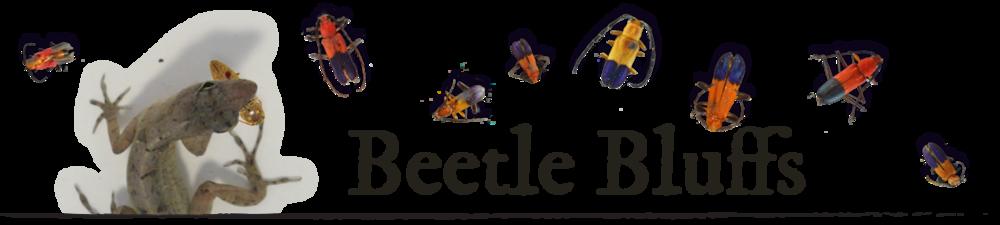 BeetleBluffsBanner_squarespace.jpg