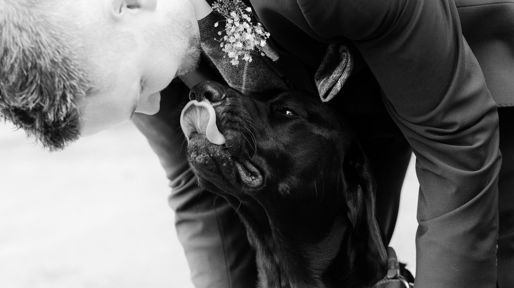 I thing the dog was very happy to see the happy couple
