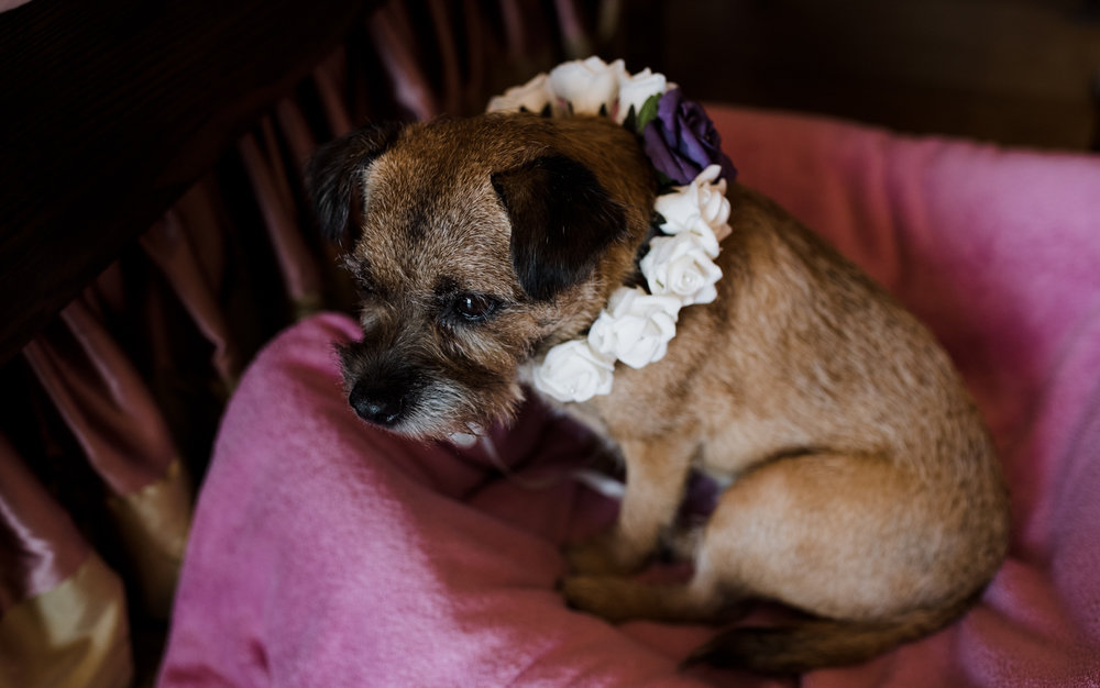 Cant say the dog is too happy about having to wear a bunch of flowers around it's neck