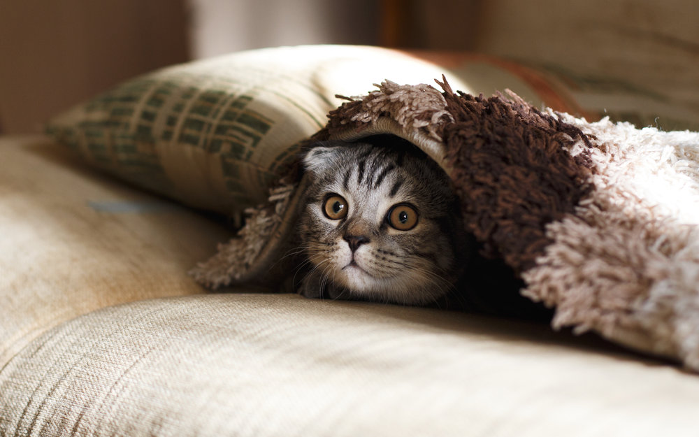 UH OH, YOU FOUND A POOPY LINK - IT'S OKAY, HERE'S STOCK PHOTO OF A CAT.