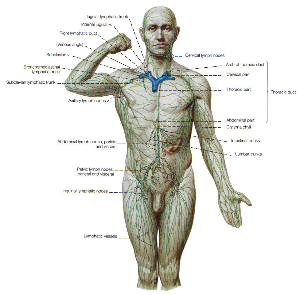 http://lipogenex.com/services/lymphatic-drainage-therapy/