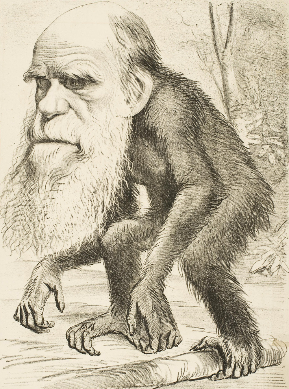 I wonder what Charles Darwin would have thought of this sketch!