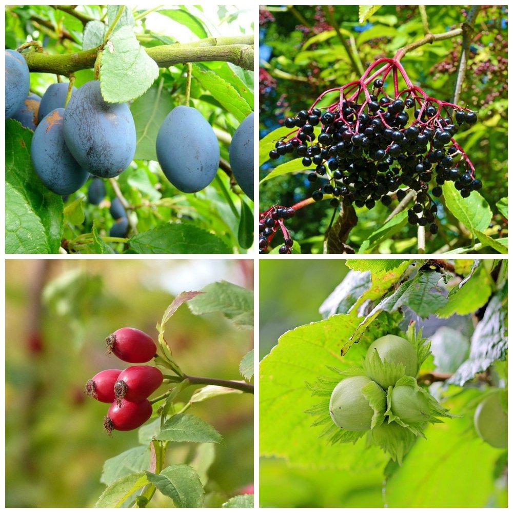 fruitsoflabour.jpg