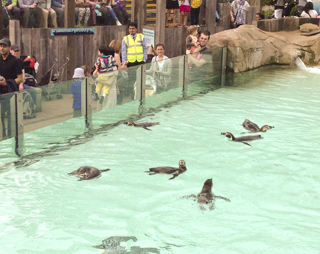 Penguin Beach at London Zoo