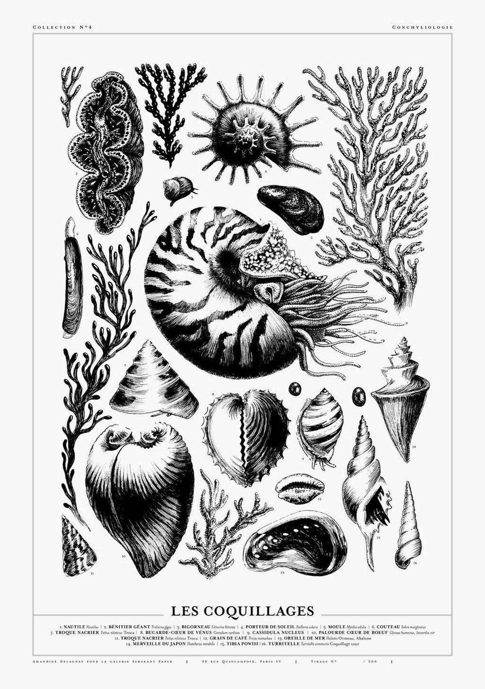 coquillages-2.jpg