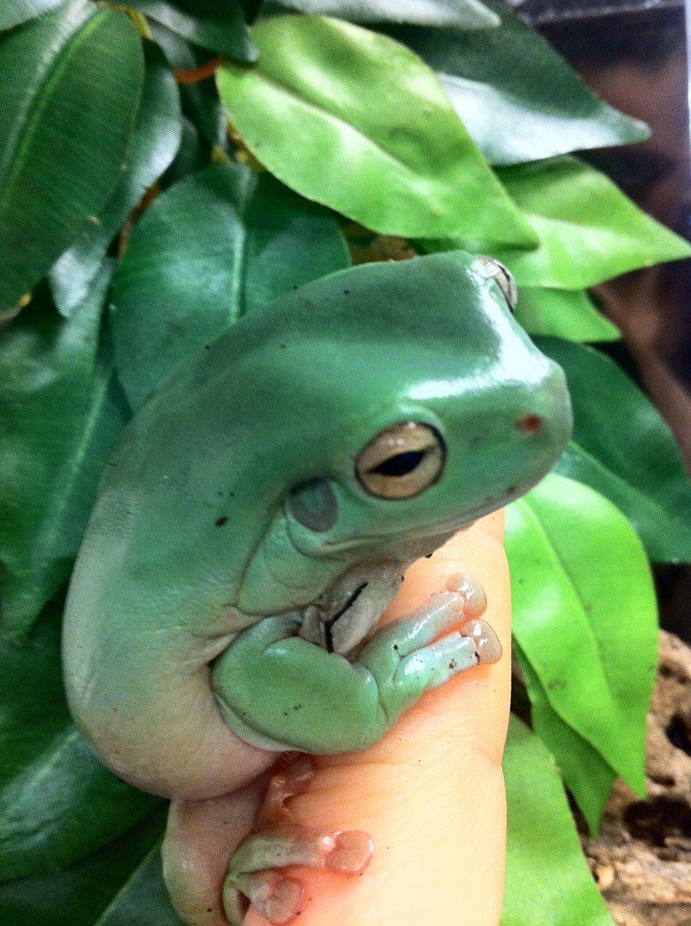 Frog (15).JPG