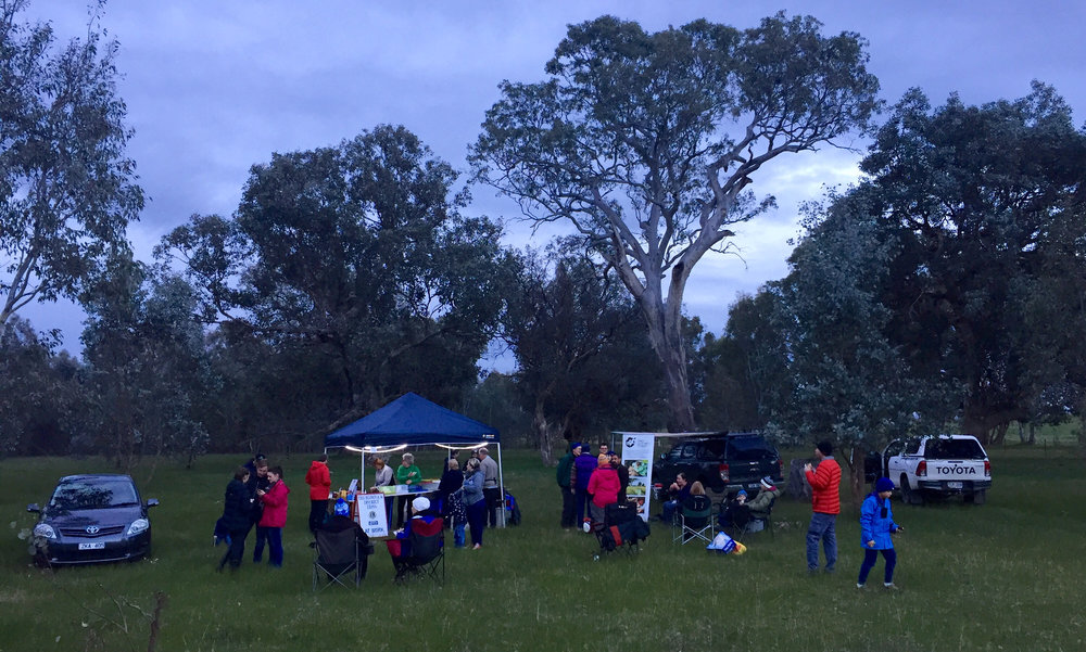 Squirrel Glider stagwatch spotlight event_31Aug2018.jpg