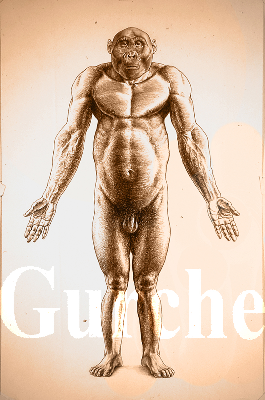 Paranthropus boisei male figure