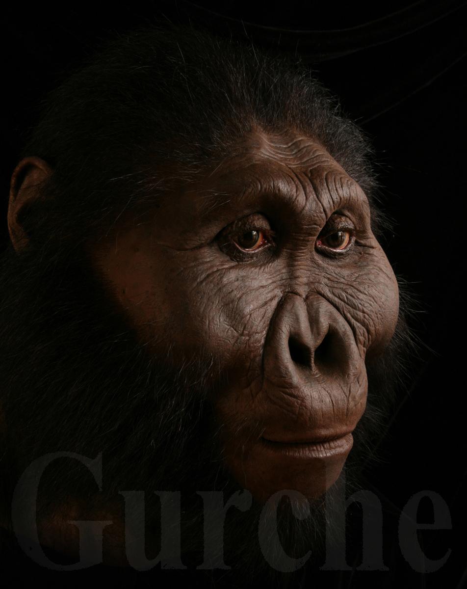 Paranthropus boisei male