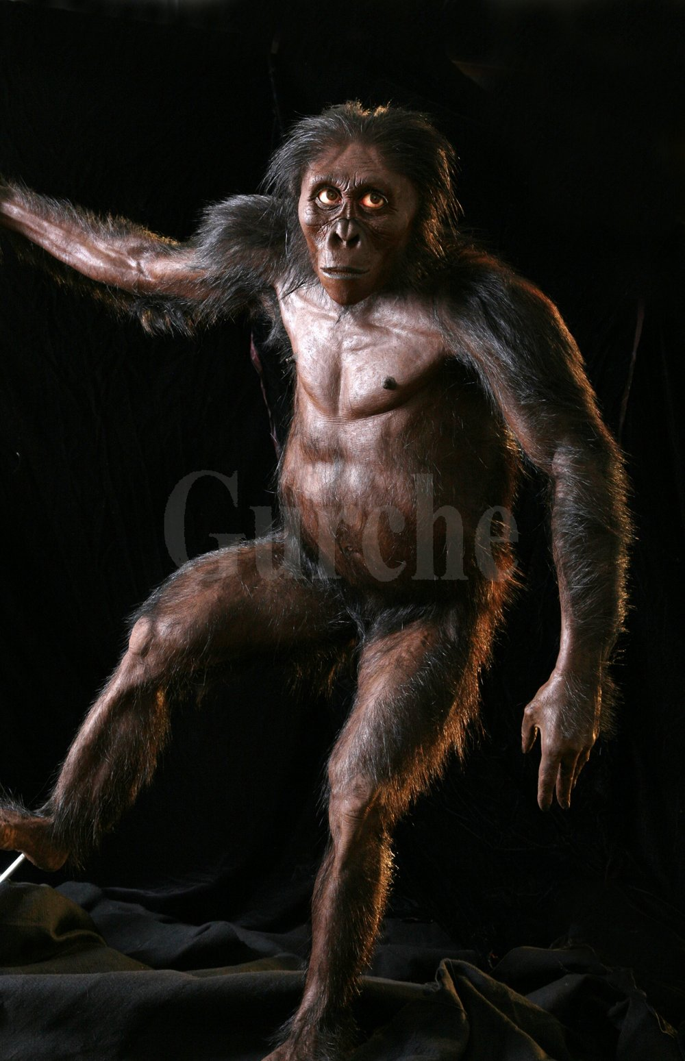 Img 982  Reconstruction of Lucy Australopithecus afarensis.jpg