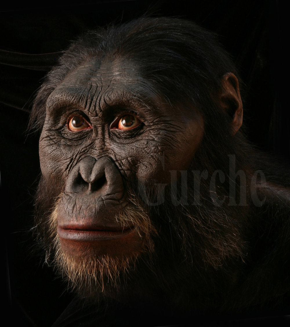 Img 981 A afarensis male reconstruction based on AL 444 skull IMG_9824.jpg
