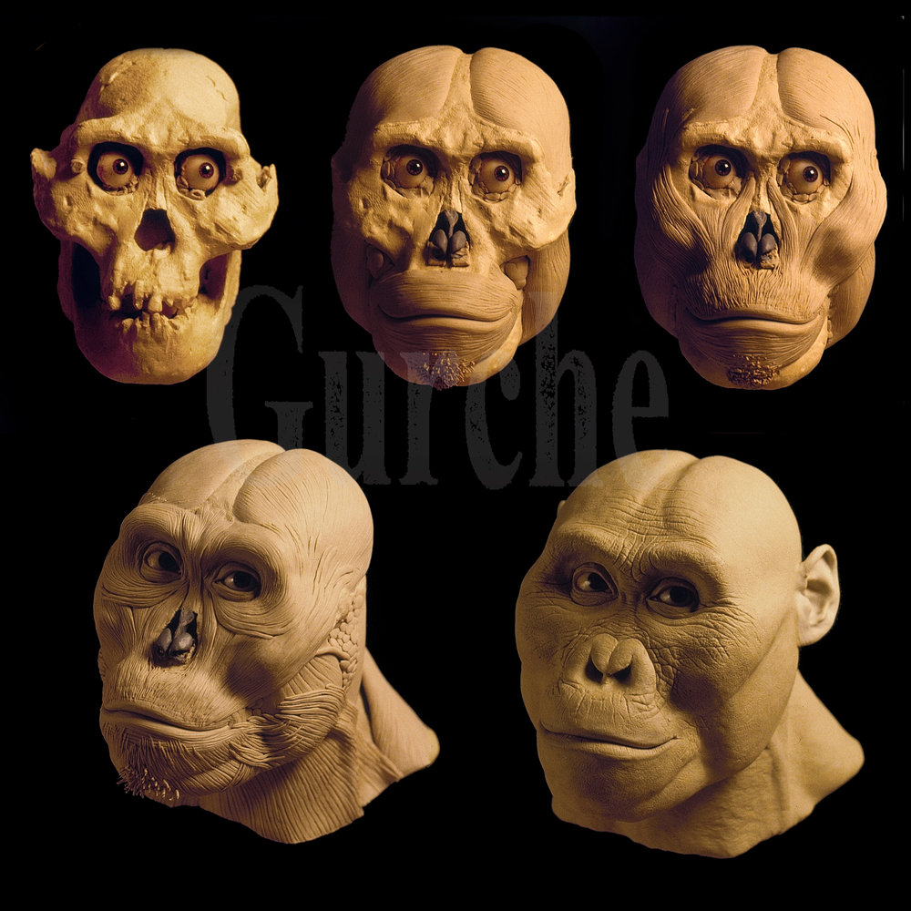 Img 983 A afarensis male based on AL 444 reconstruction process.jpg