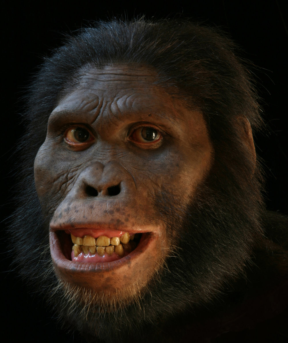 Alternate views of  Australopithecus africanus  reconstruction, now in the Smithsonian's Hall of Human Origins.