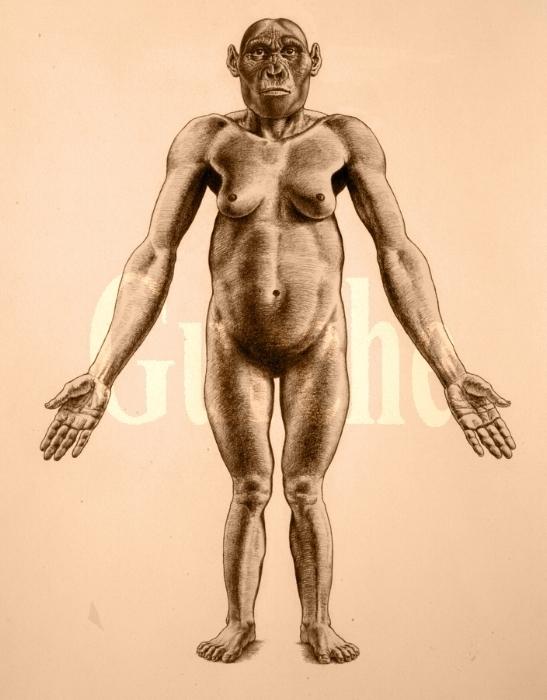 IMG 816 A africanus adult female LAn 818.jpg