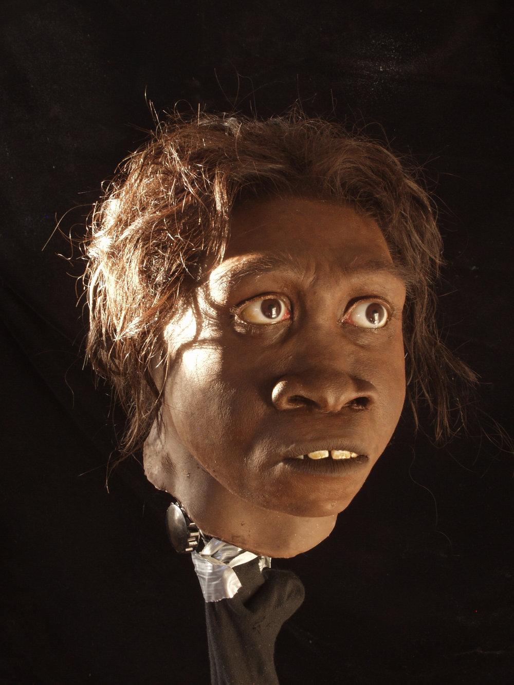 Turkana Boy (WT 15,000), a young  Homo erectus .