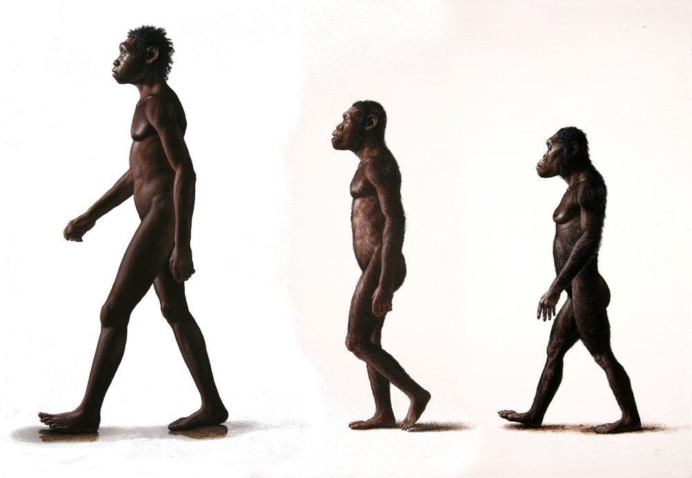 Homo erectus  (Turkana Boy) with  Australopithecus sediba  and  A. afarensis  (Lucy).