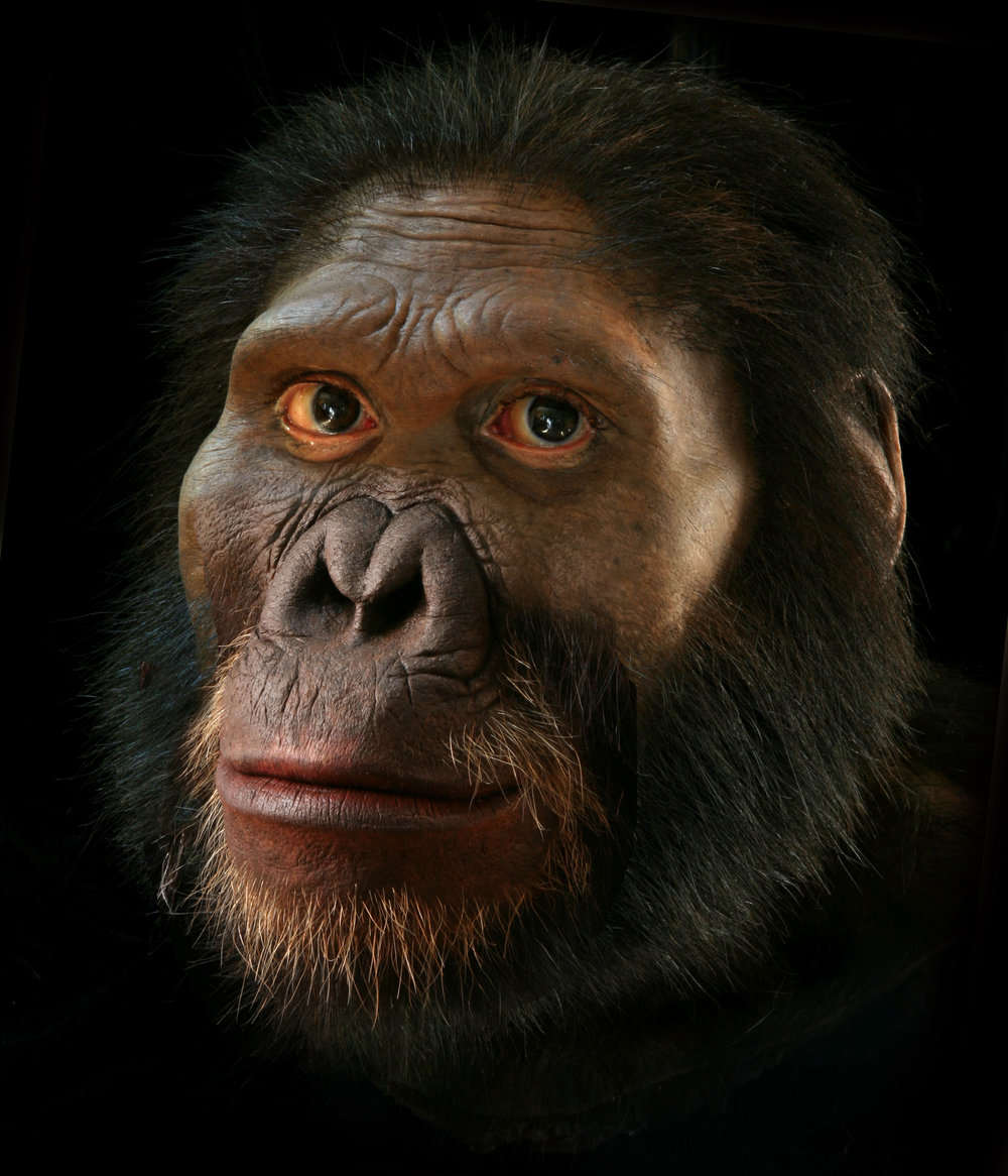 Alternate reconstruction of Australopithecus africanus with closed mouth.