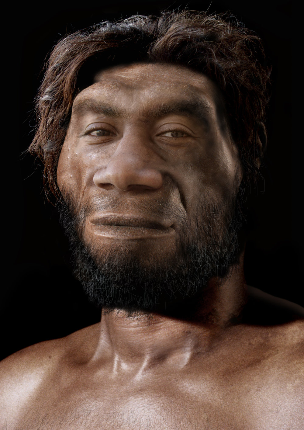 Homo erectus  male (Sangiran 17) from Java.