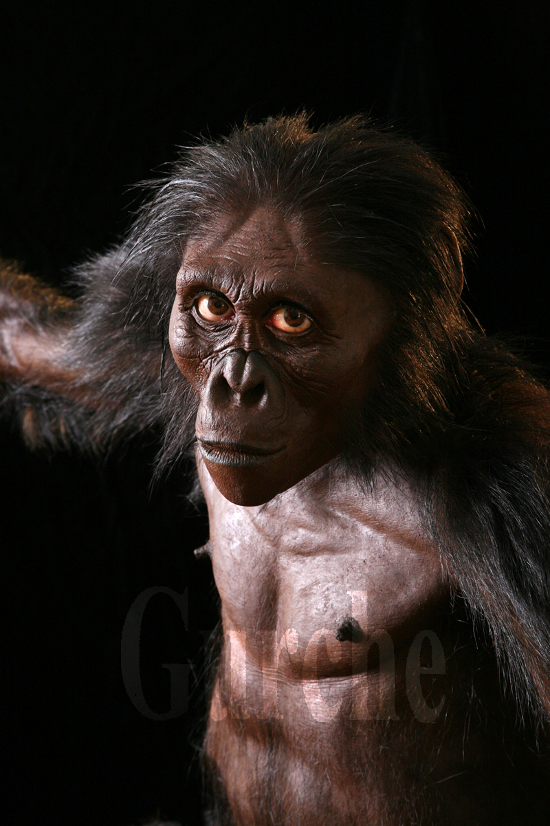 Image 796 A  Reconstruction of Lucy Australopithecus afarensis.jpg.jpg
