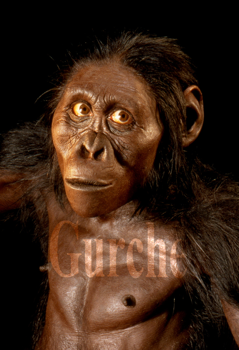 IMG 812 A afarensis female Lucy close-up.jpg