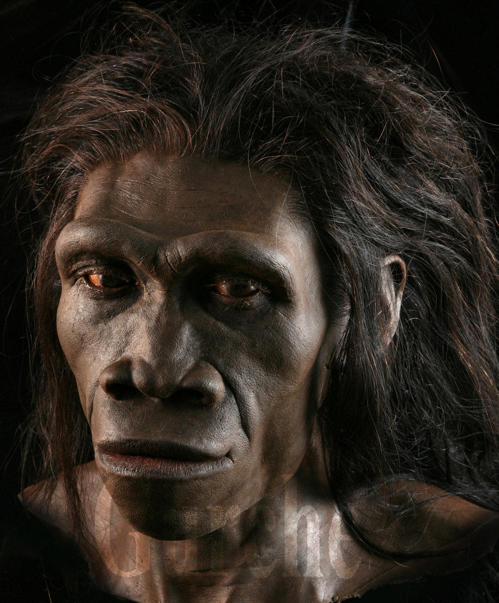 Image 654 Homo erectus female based on ER 3733 and the ER 992 mandible.jpg