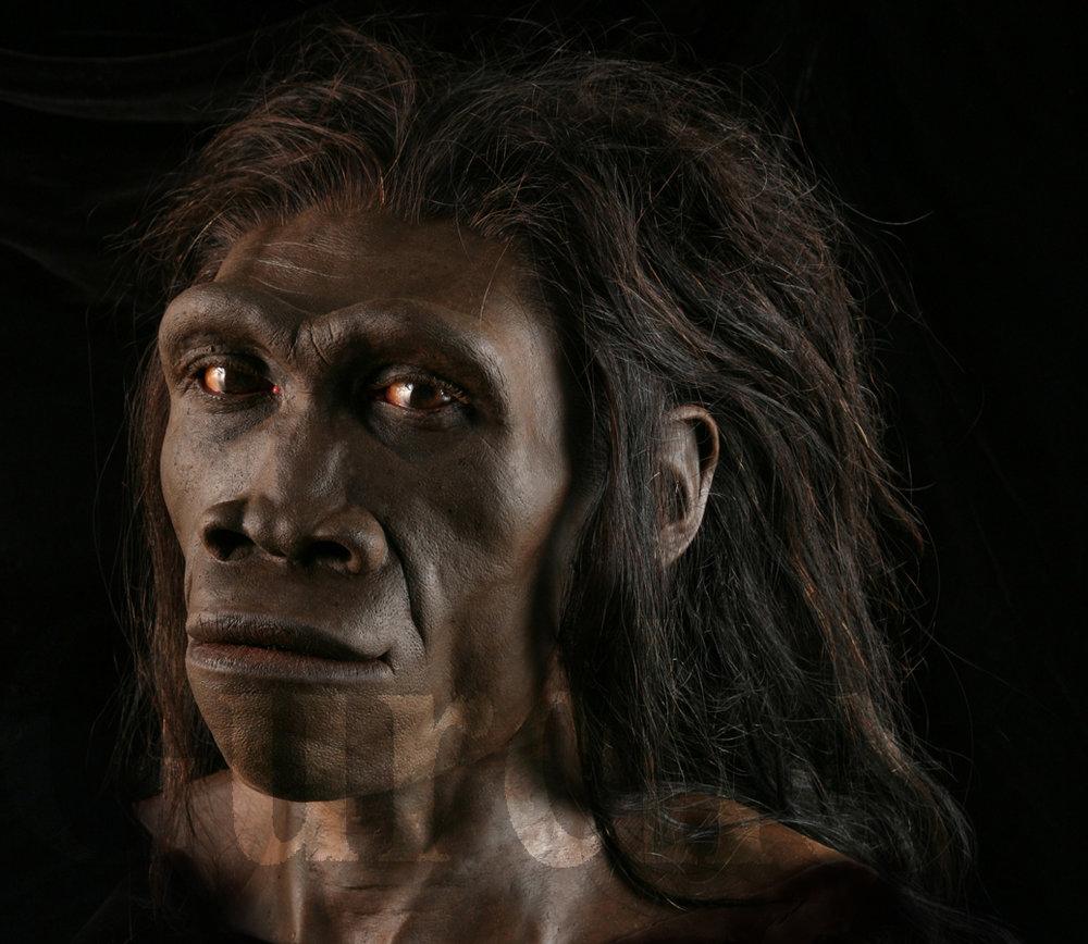 IMG_804 Homo erectus female based on ER 3733.jpg