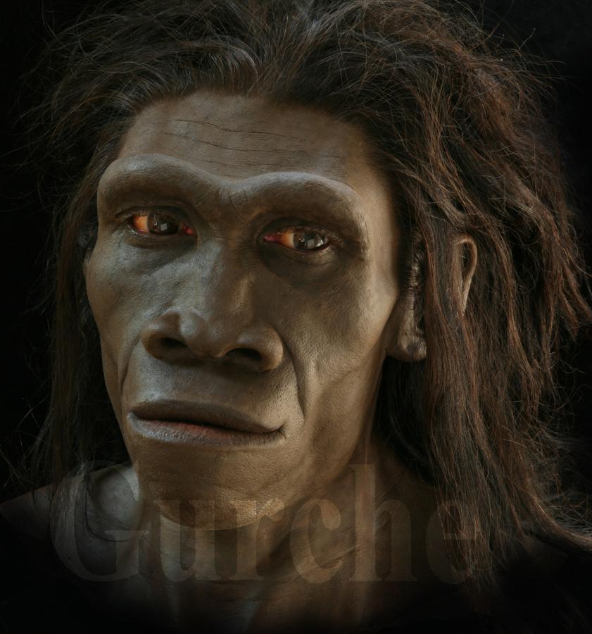 IMG 807 Homo erectus female based on ER 3733 and ER 992.jpg