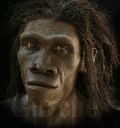 Do deniers of evolution believe in other species of human ...