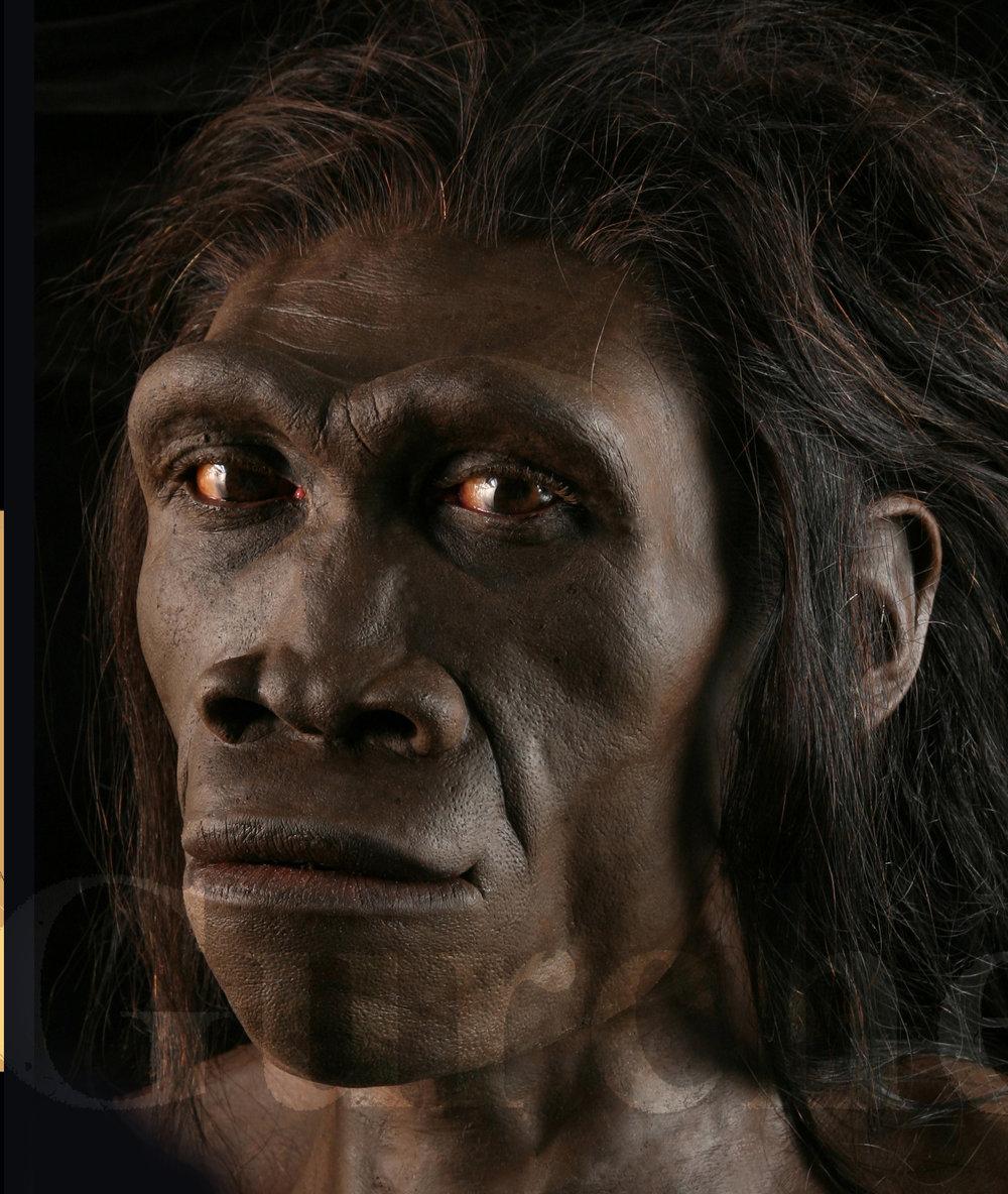 IMG 993 Homo erectus female based on ER 3733.jpg