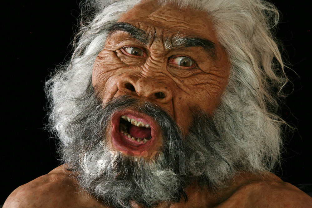 IMG_9832a Homo erectus male at Dmanisi based on skulll 5.jpg