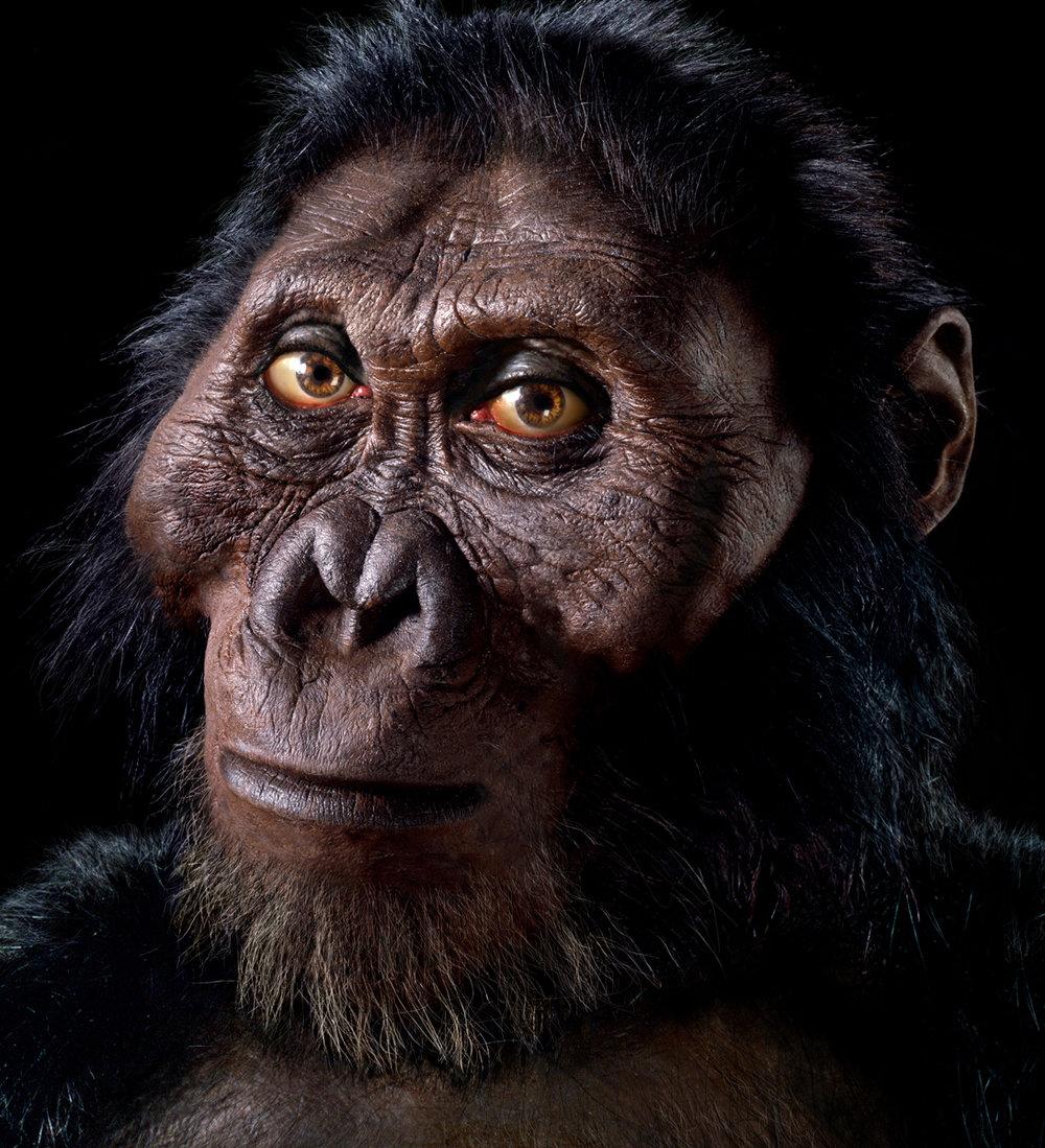 Paranthropus robustus male