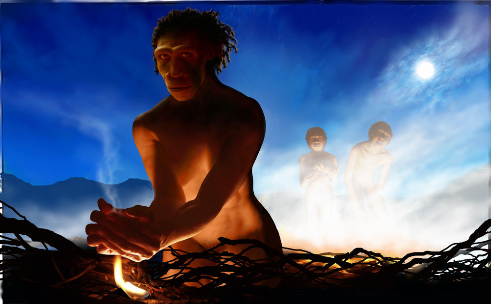 Homo erectus  and fire.