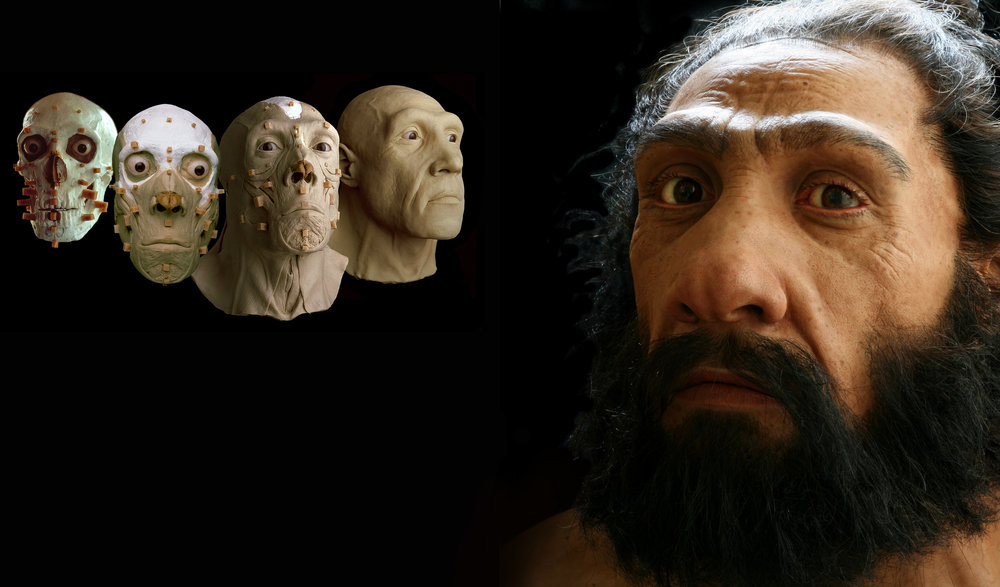 Stages in the reconstruction of the Shanidar 1 Neandertal.