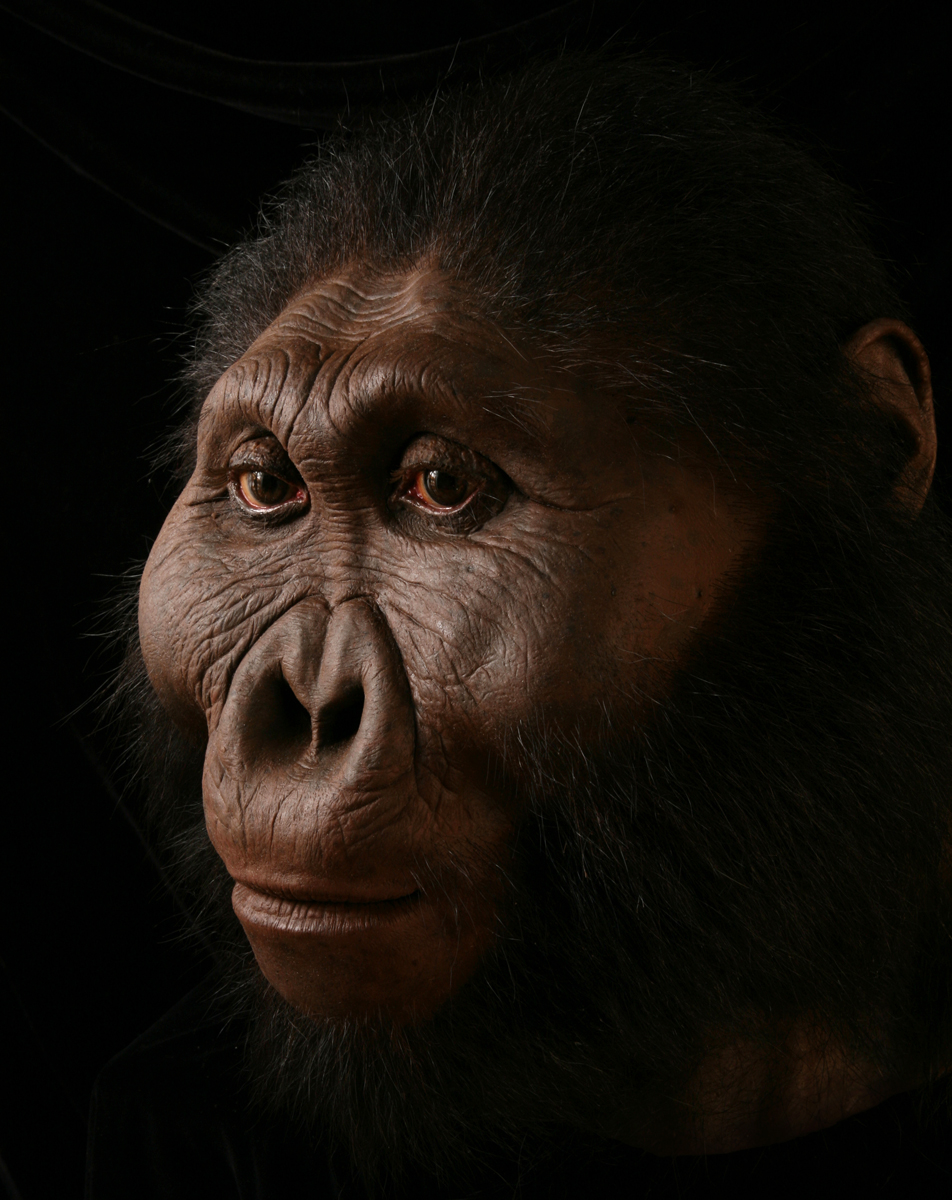 Paranthropus boisei male, based on OH 5 and Peninj mandible, created for the Smithsonian's Hall of Human Origins.