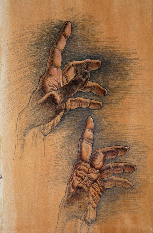 Hands of  Homo sapiens  and  Pan paniscus