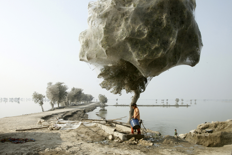 RussellWatkins-Pakistan-floods-spider-trees-Sindh-girl-Dec-2010-800px.jpg