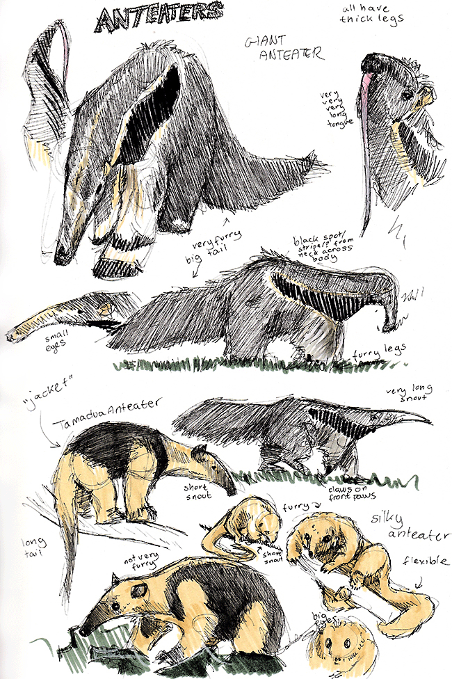 f_anteaters.png