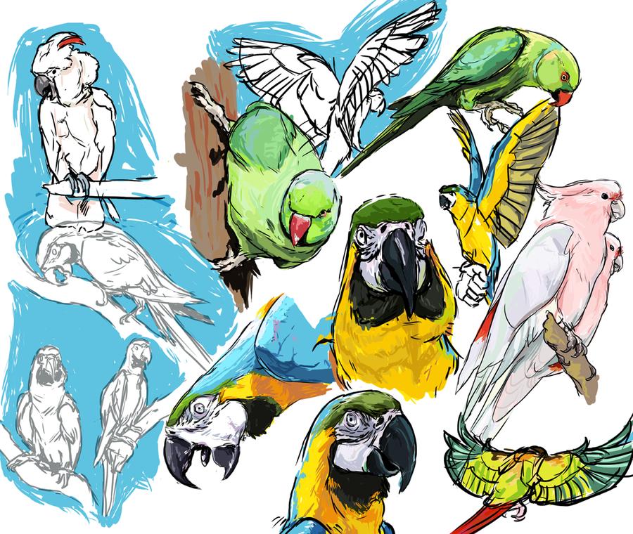 f_parrots.png